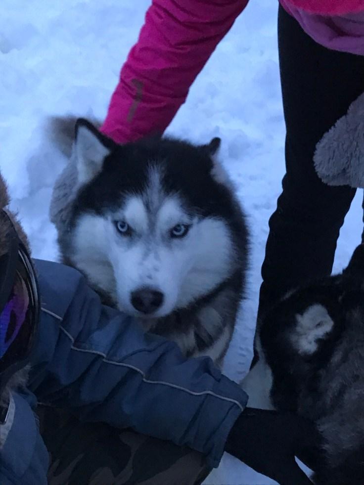 Paasiku mōis, huskyt, Viro, itä-Viro, visit Estonia
