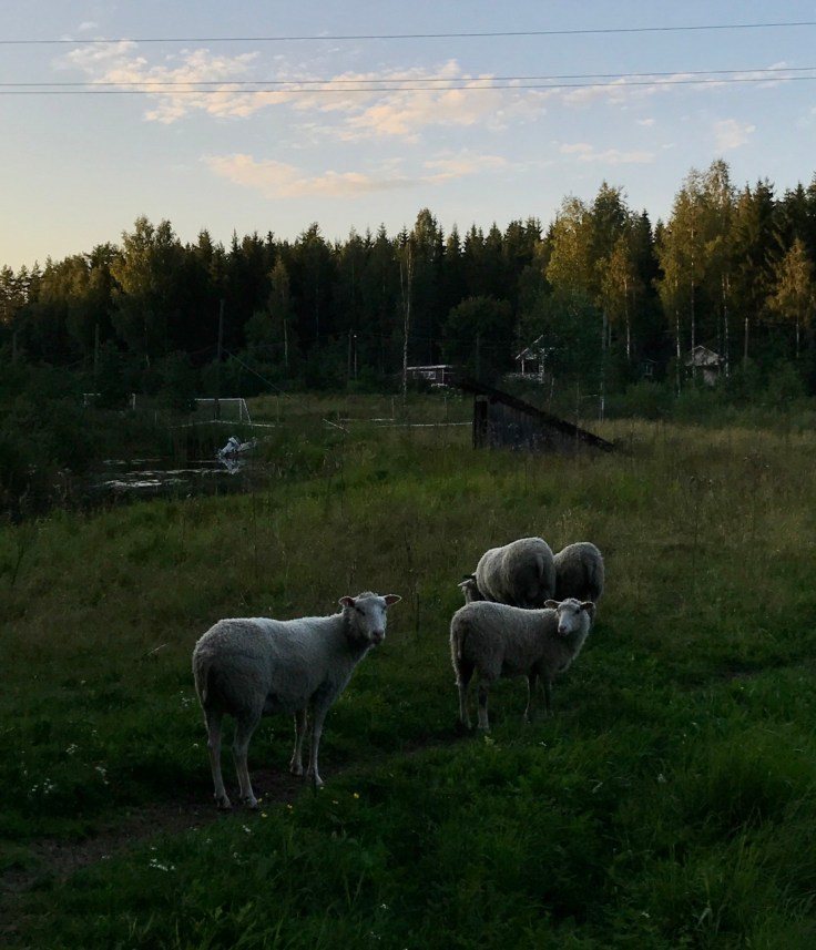 Lampaat, Punkaharju, Visit Savonlinna, Visit Saimaa