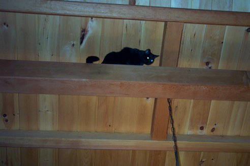 in the rafters