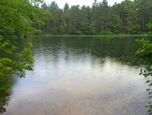 rain on plain pond