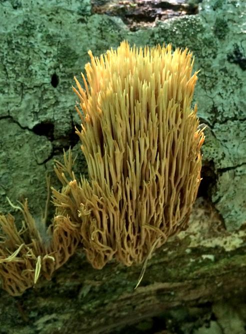 weird fungus