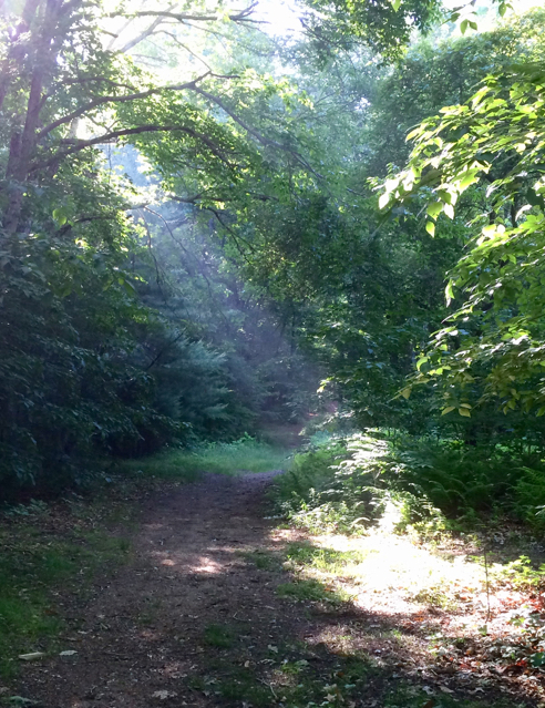 morning sun on the trail