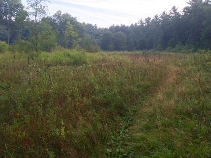 field on the shelter trail