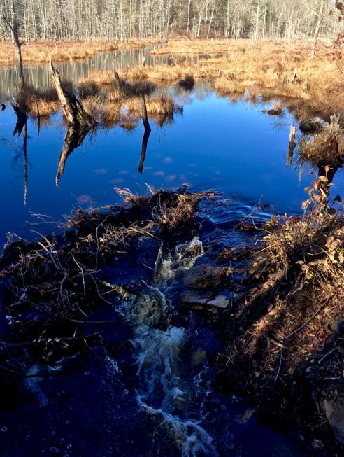 Beautiful Blue Reflections