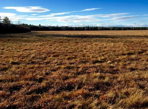 Huge Meadow
