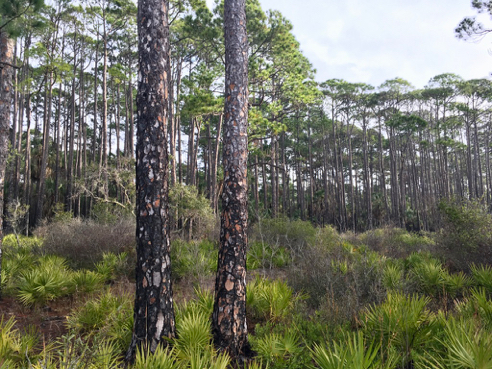 Typical Panhandle Woodland