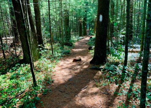 Pond Trail