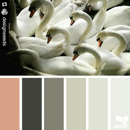 Swan palette by @designseeds. Credit: Jessica Colaluca