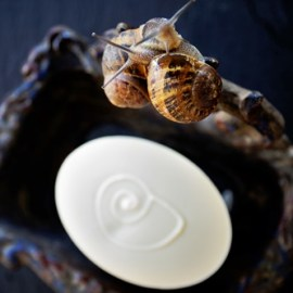 Snail Soap by Auntie Clara's