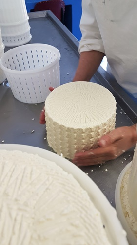 Langbaken Cheese freshly made