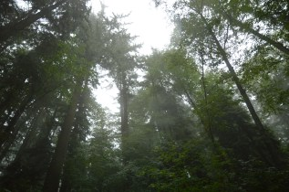 And even more mist!
