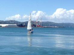 Lots of sailboats