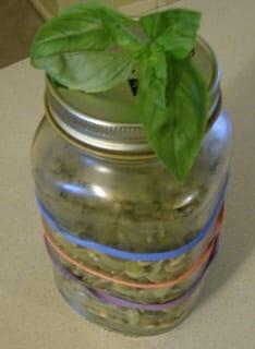 auntie stress elastic jar