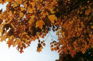 auntie stress autumn