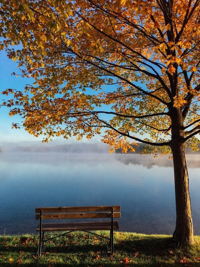 Autum. A bench under a tree overlooking a lake.