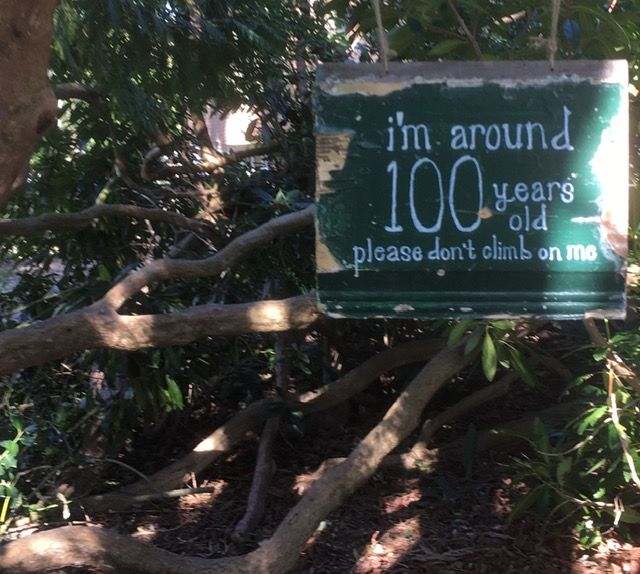 Sign on rhododendron tree: Please don't swing on this 100 year old tree.