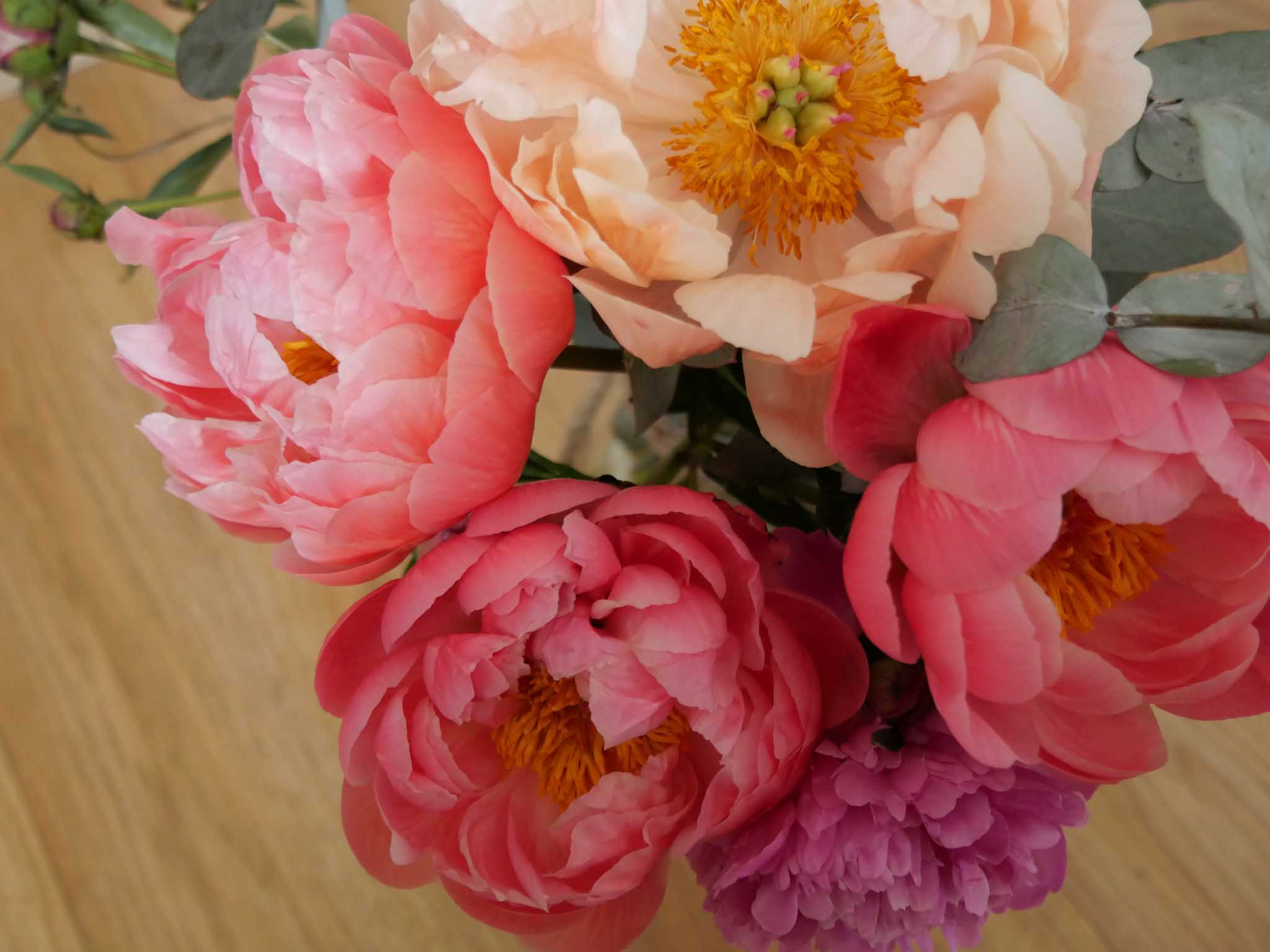 Pivoine camaieu de rose