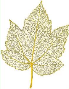 feuille aur