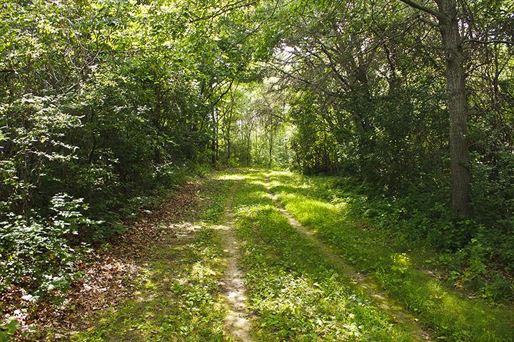 #5 Hyland Park Reserve