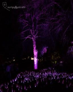 nightfest_024