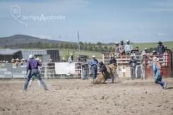 Bull_Riding_3