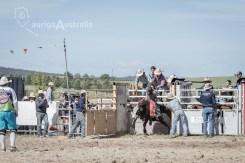 Bull_Riding_31