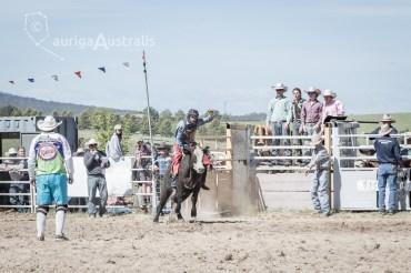 Bull_Riding_33