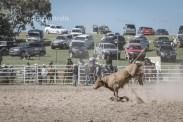 Bull_Riding_7