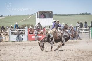 Saddle Bronc_11