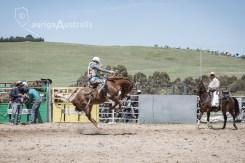 Saddle Bronc_3