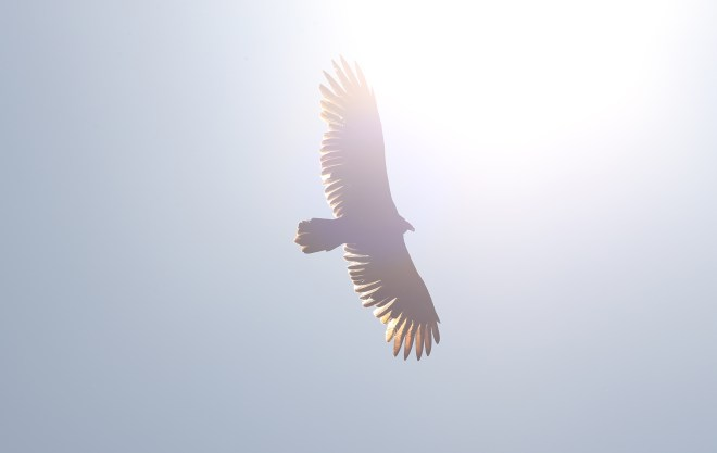 vulture clean