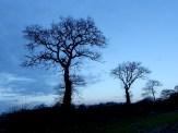 Tolle Bäume die Wind und Wetter trotzen