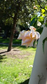 Another sadder looking flower