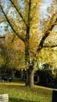 Tree_portrait