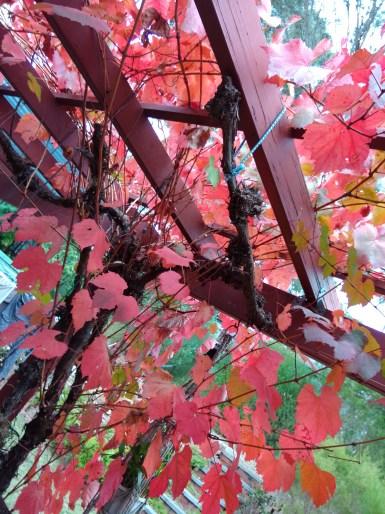 Oppo-N1-Autumn