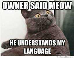 cat input