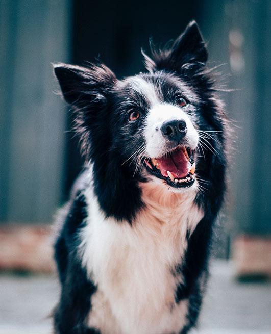 Sterilisation chien et chienne