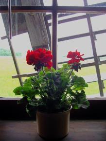 Blumentopf am Fenster mit Flügelkreuz Windmühle |Bockwindmühle Bechstedtstraß