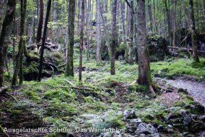 Waldstück auf dem Weg zur Eiskapelle
