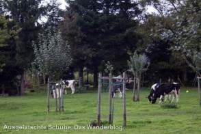 Streuobstwiese Leichlingen
