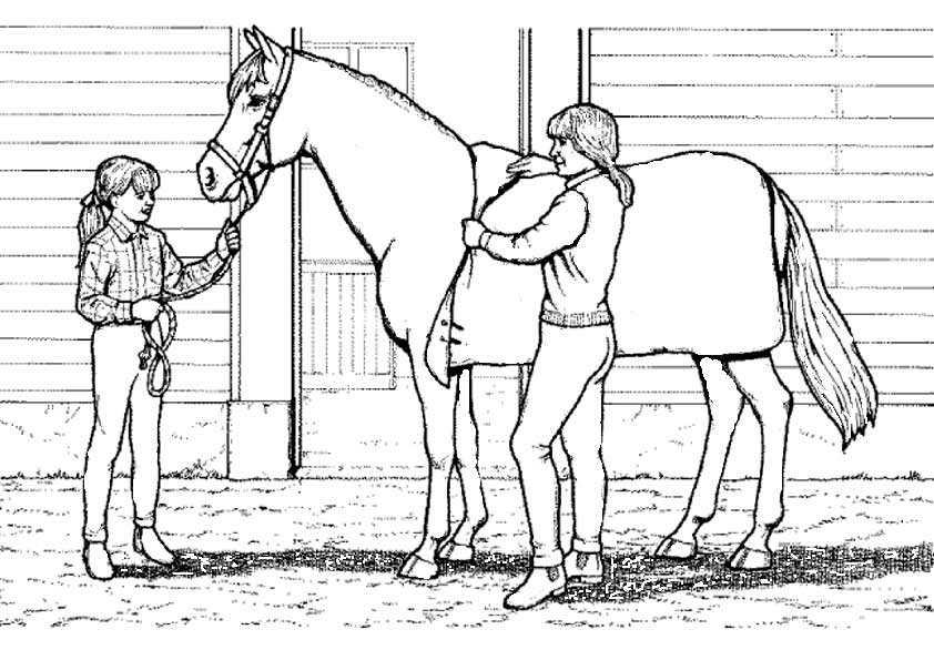 Ausmalbilder Kostenlos Pferde 15 Ausmalbilder Kostenlos