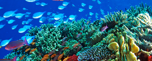Image result for Great Barrier Reef