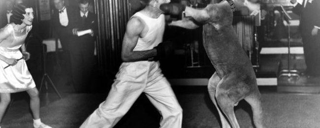 TIL: Men Used To Fight Kangaroos For Entertainment