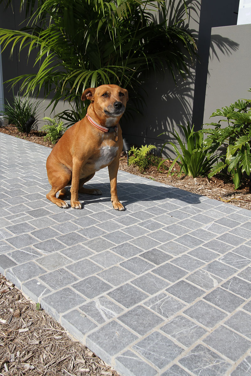 A dog sitting on a garden path build with Bindoon limestone cobblestone