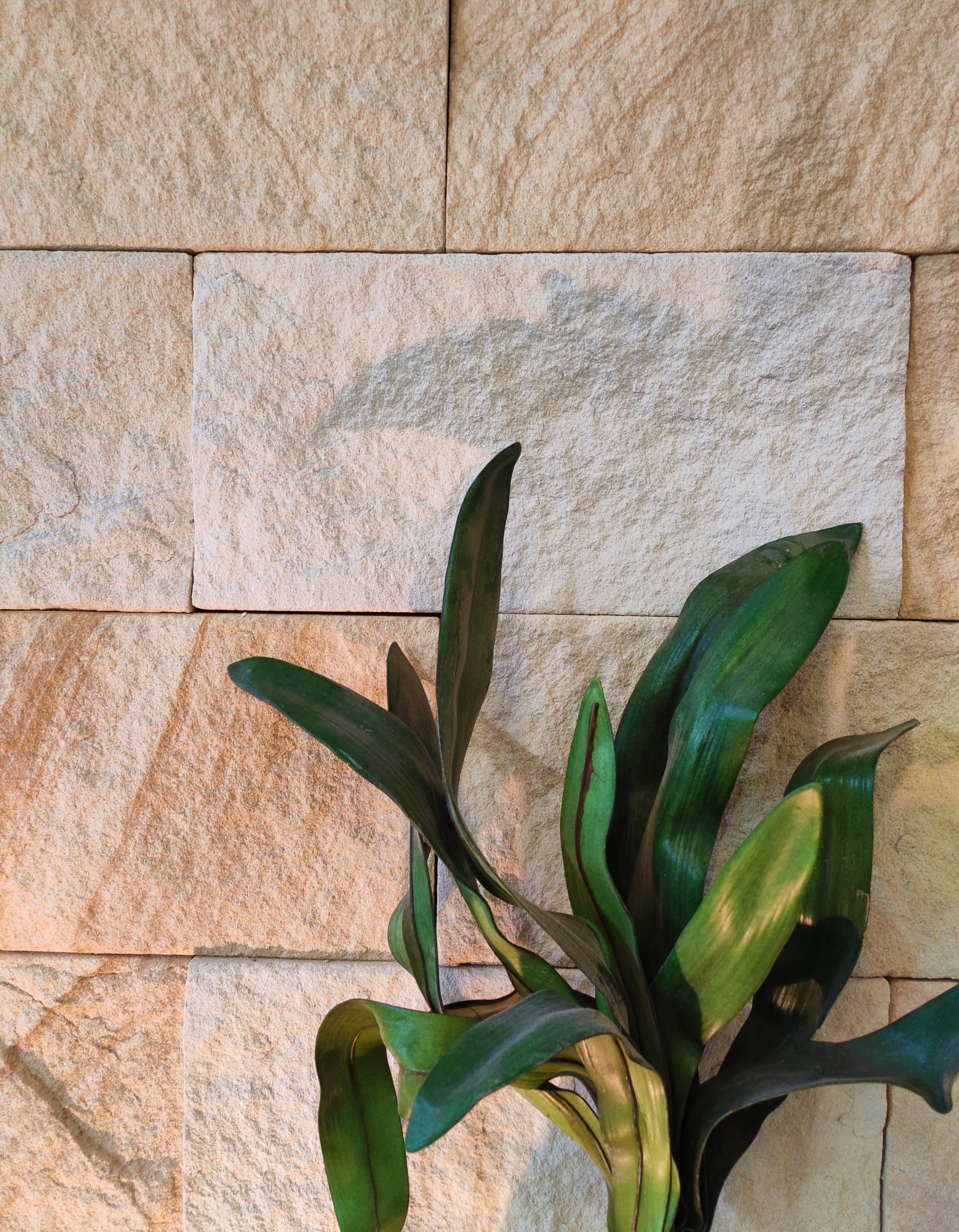 Kirra banded walling sandstone cladding with a green plant