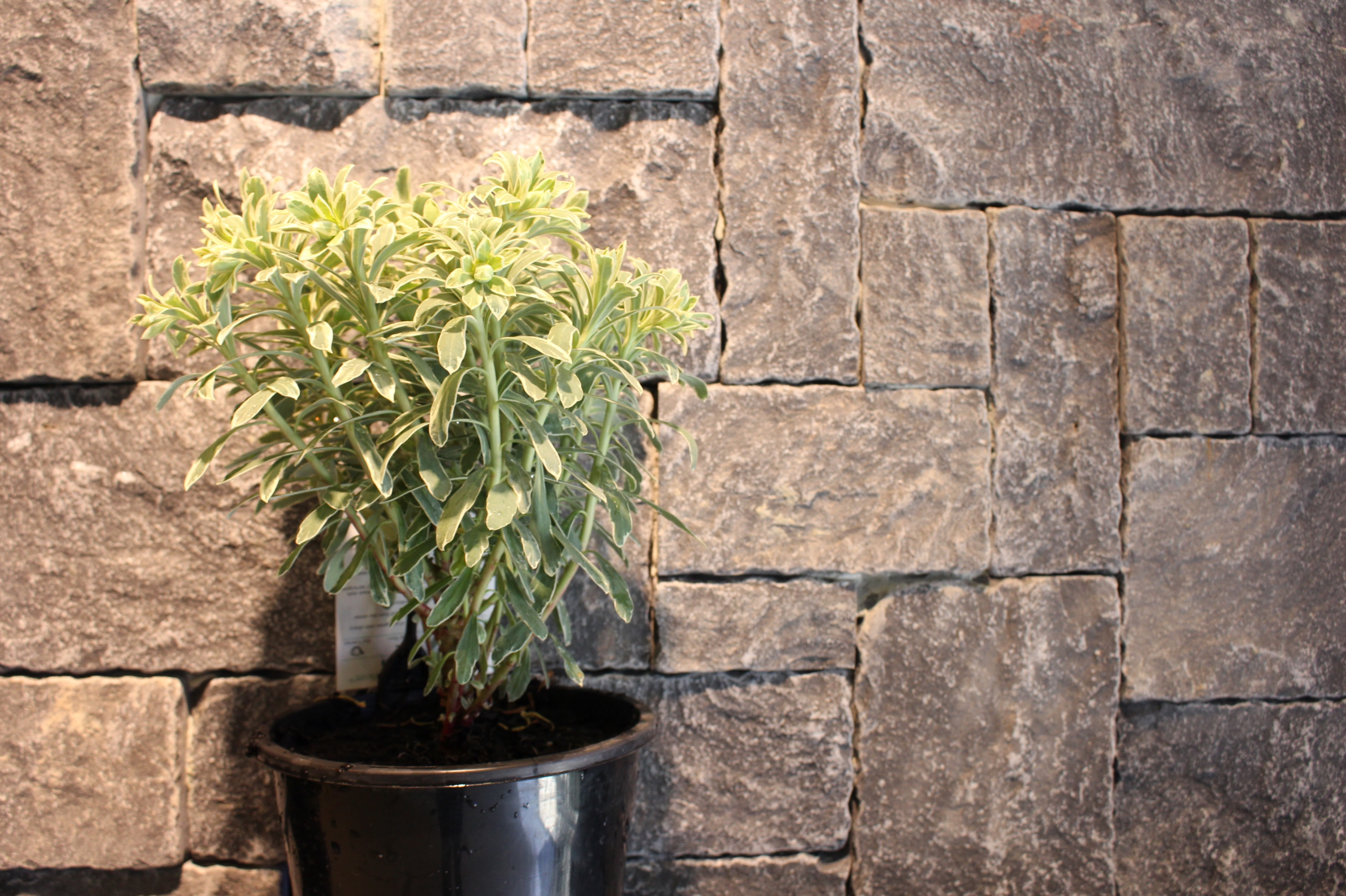 Weipa stone walling displayed as interior wall cladding in Lidcombe with some plant decoration