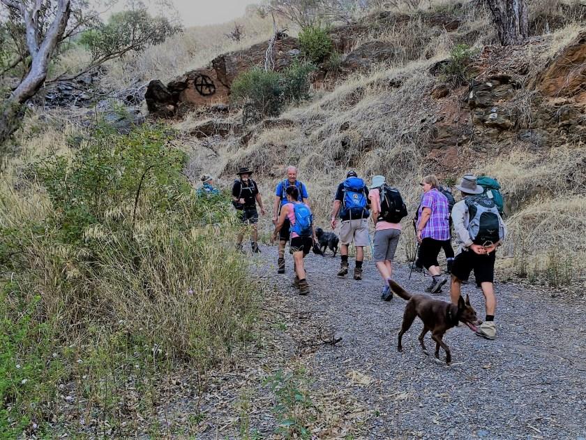 Sturt Gorge Walk