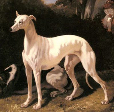 Greyhound Alfred Dedreux1810–1860
