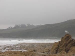Overcast_coast_with_seagull