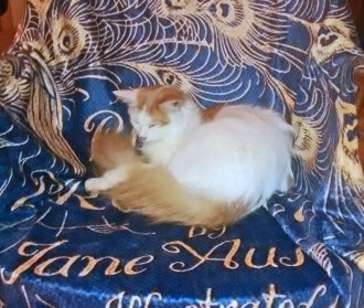 P&P blanket (cat not included)